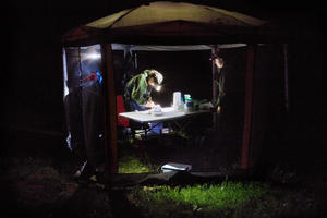 Three people wearing headlamps stand around a table in a portable screen tent in dark of night.