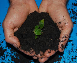 Two hands hold dark dirt with small green plant growing in middle.