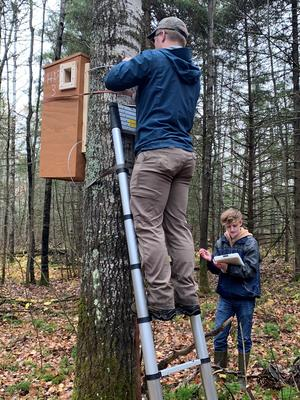 Man stands on ladder propped against a tree to attach large wooden box.