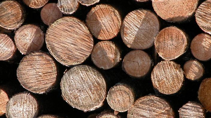 Close up view of the ends of logs