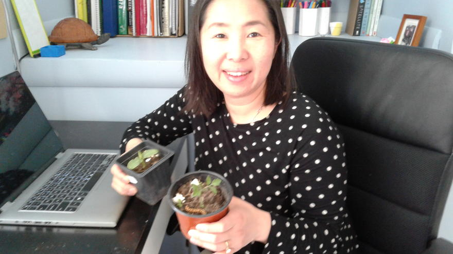 A woman sits at a desk holding two plant pots with small plants in each.