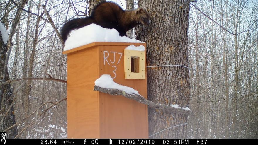 A brown furry with tail sits on a wooden box attached to a tree.