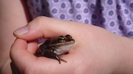 Child's hand holding small frog