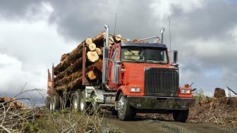 Red logging truck hauling logs drives on a dirt road.