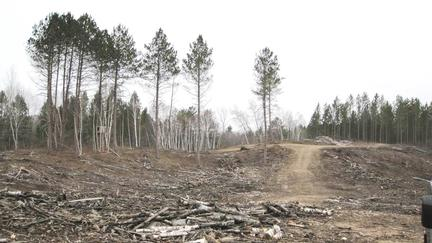 After tree harvest image shows mostly bare ground with some tall trees standing