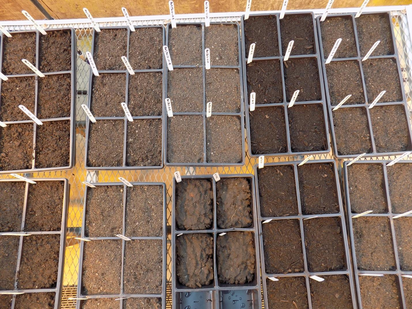 Open containers of different soils lined up in rows on a table top.